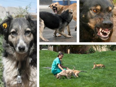 «Стрелять нельзя помиловать»: почему проблема бродячих собак в Баку никак не находит своего решения?