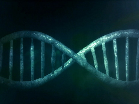 Ученые узнали, как увеличить длительность жизни на60%