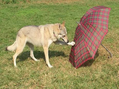 Собаки запоминают все действия владельца — Исследование