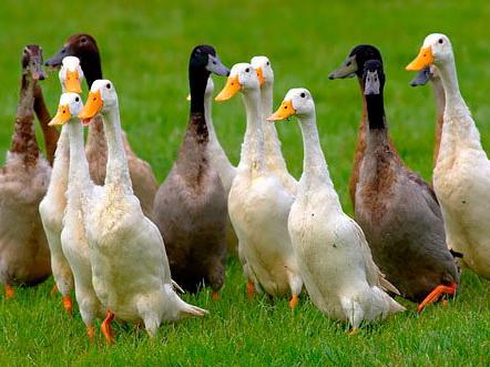 Euronews: ВГермании усиливается эпидемия птичьего гриппа