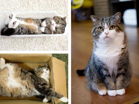 Кот который попал в книгу рекордов гиннеса