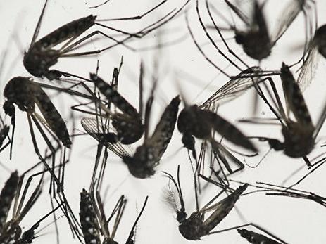 ВБразилии отменён режим ЧП, введённый всвязи сраспространением вируса Зика