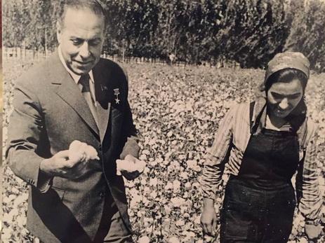 Исторические этапы развития хлопководства в Азербайджане – ЧАСТЬ I