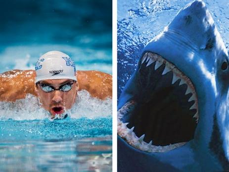 Майкл Фелпс проведет заплыв против белой акулы
