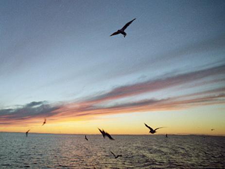 Ктрагедии наЛадожском озере привела неустойчивая погода— Сенатор