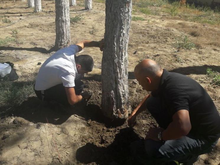 Возбуждено уголовное дело всвязи суничтожением вресторане 67 деревьев