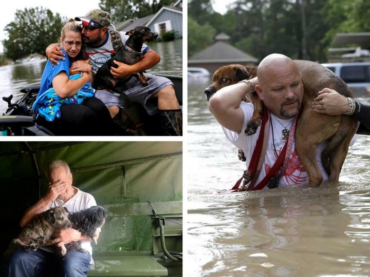 Трогательные кадры спасения животных после урагана Харви - ФОТОРЕПОРТАЖ