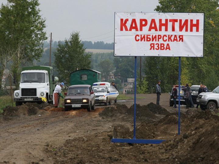 ВКиргизии зафиксирована вспышка сибирской язвы