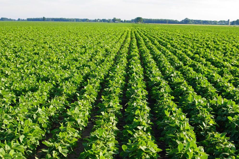 Картинки выращивание сои 90